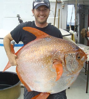 Photo of man holding up a specimen of opah