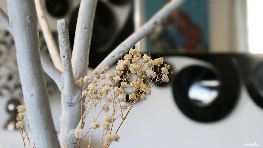 paniculata seca