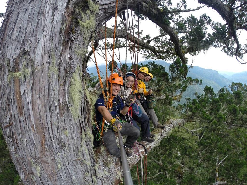 筆者與攀樹夥伴在2014年首次登上棲蘭的台灣杉三姊妹。圖片來源:楊嘉君。