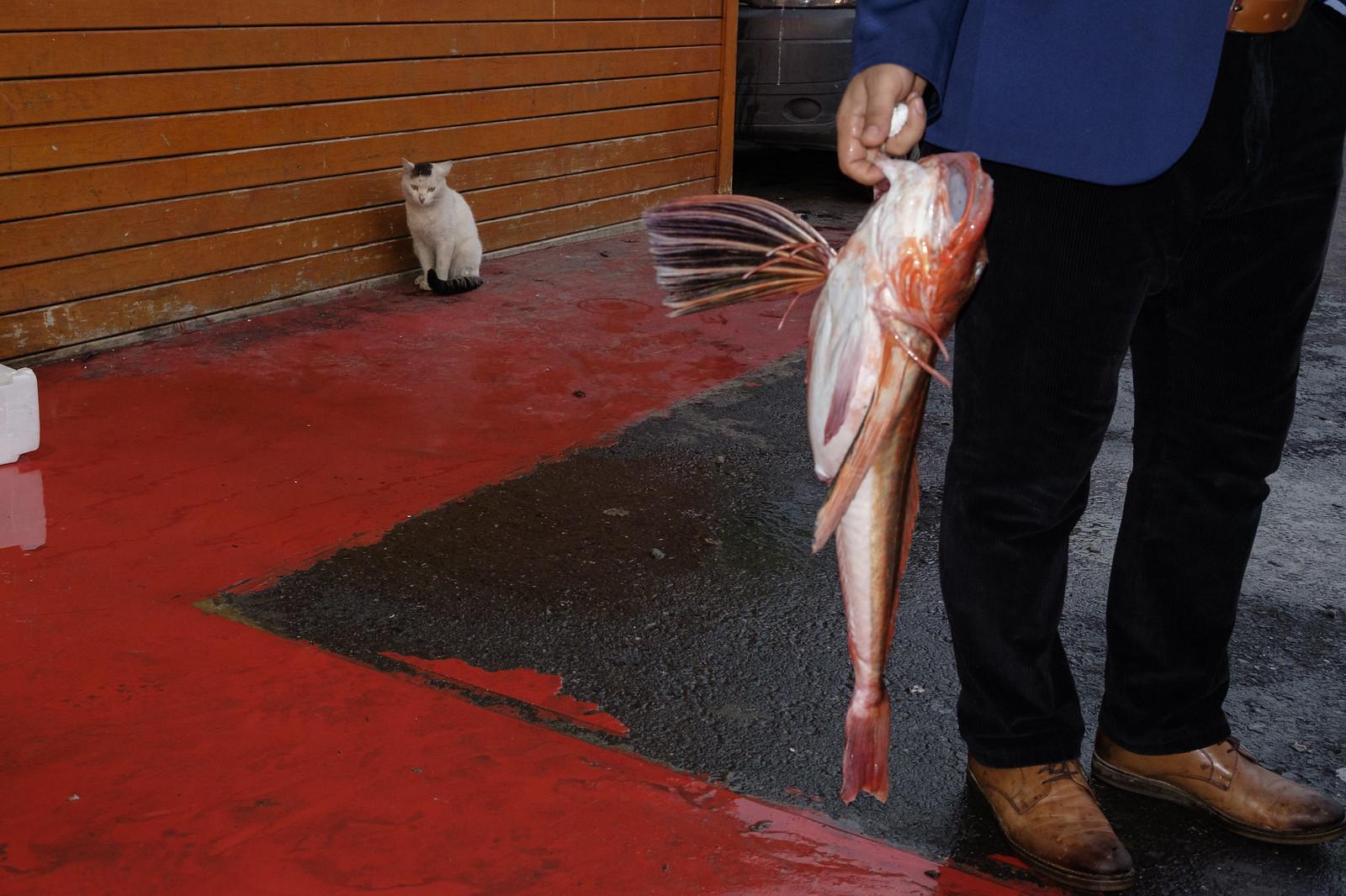 Kırlangıc ve kedi | by Ufuk Akarı (TURKUAZSTREET)