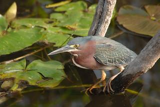Green Bird Egg Photos On Flickr