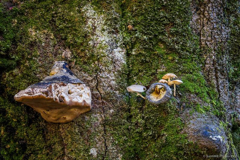 Setas en un árbol de Akarreta