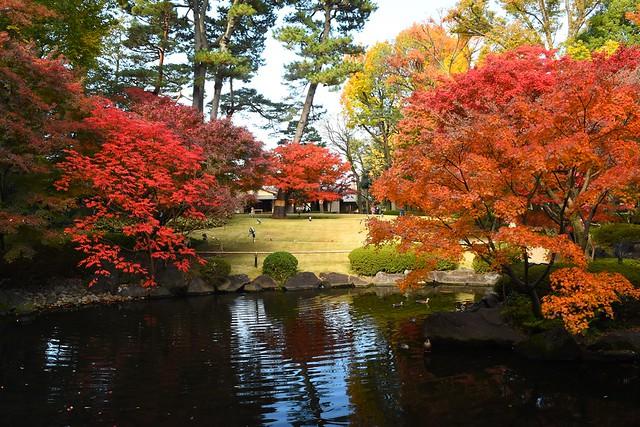 大田黒公園 池と紅葉