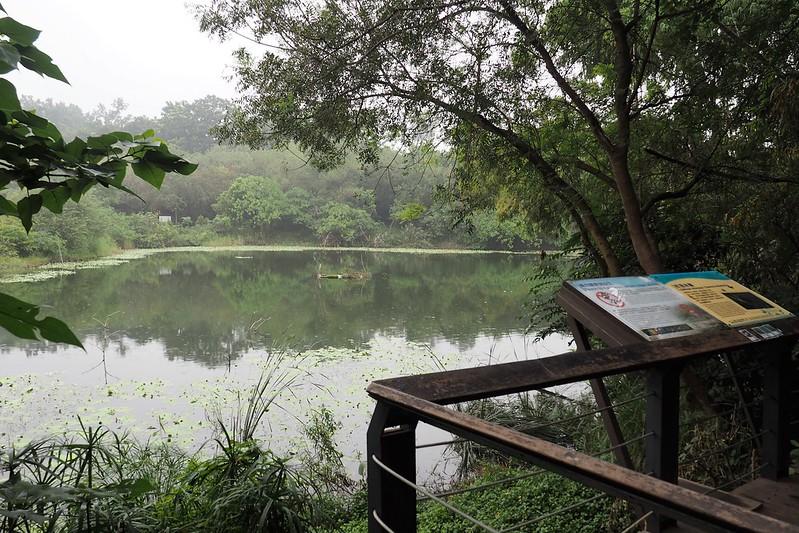 鳥松濕地也在今年再評定的過程中面臨地主水公司要求收回的威脅。攝影:李育琴。