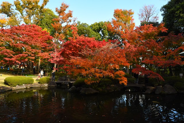 大田黒公園 池の紅葉風景