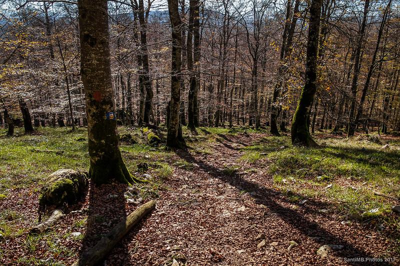 Bosque de Urbasa subiendo al Paso de Altsasu