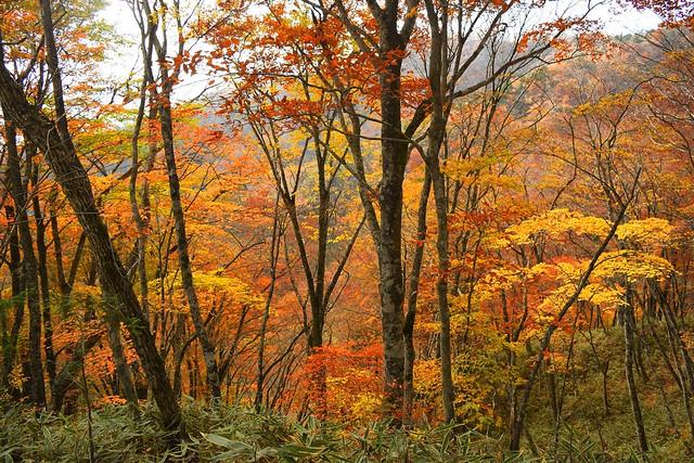 石割山の紅葉風景