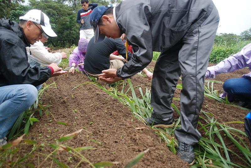 優志旺員工第一次幫自然農法紅蘿蔔採種、播種,在雙十一這一天獲得新鮮的農事體驗。