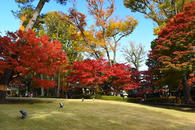 大田黒公園 芝生の周りの紅葉風景