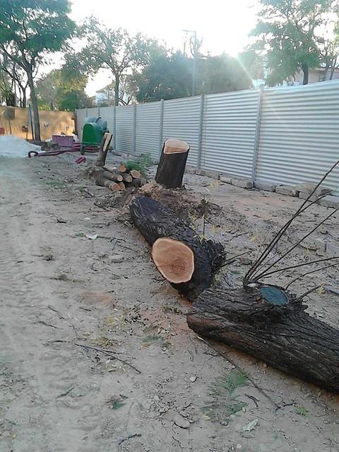 AionSur 23962147817_eb70575258_z_d Jaedilla Ecologistas en Acción denuncia que la tala de La Fuente ha sido un 'arboricidio' Medio Ambiente