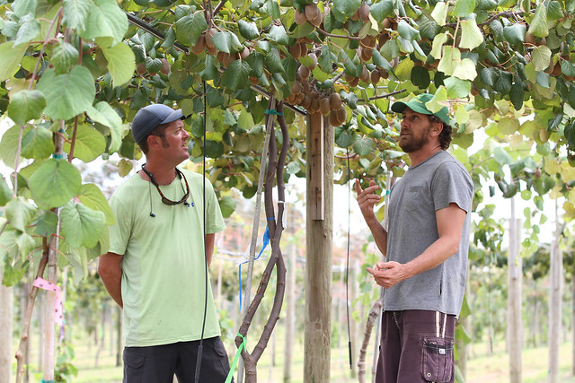 Orchard manager Clint Wall, right, discusses the Southeast Kiwi Farming Cooperative's first crop with his co-worker and fellow Auburn horticulture alumnus Eric Houser