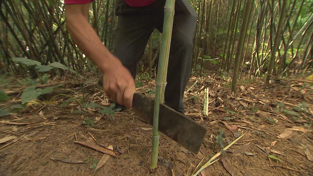 929-2-03 新竹紙寮窩,滿山綠意最多的就是竹林,早期居民日常所需,幾乎都來自竹子。
