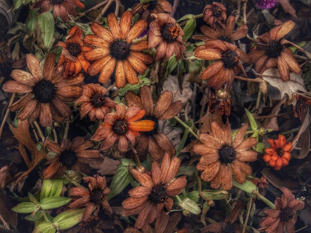 Garden In Fall | Moment captured at Boerner Botanical Garden… | Flickr