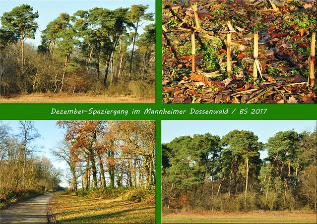 Unterer Dossenwald Mannheim ... Kühbrunnen, Kühbrunnen ... Brigitte Stolle, Mannheim 2017