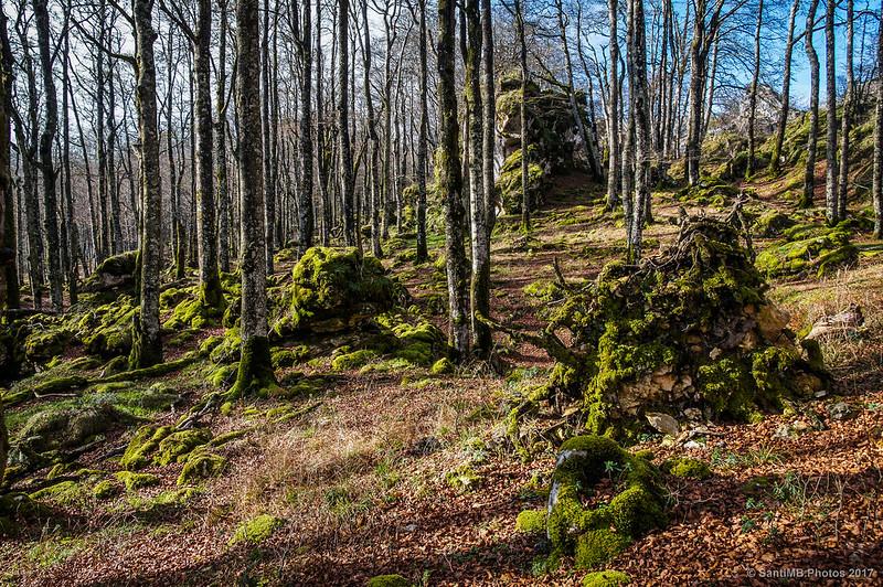 Bosque Encatnado de Urbasa