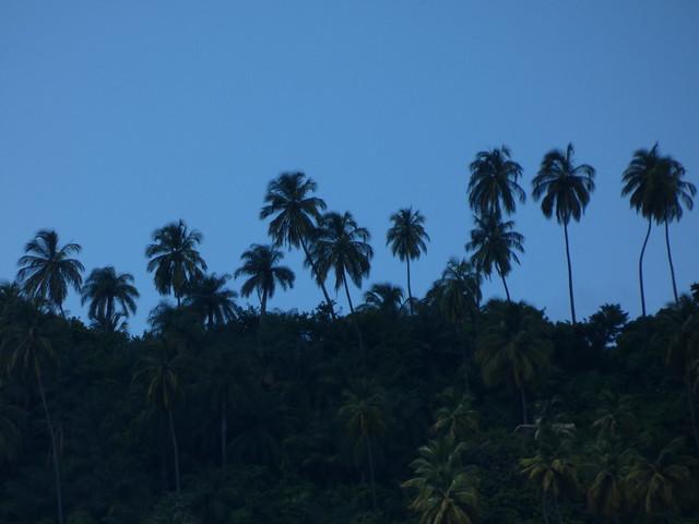 Palmeral en Islas del Caribe