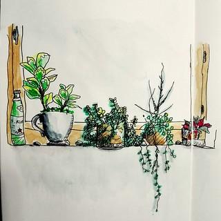 Mon petit jardin d\'intérieur... | cecile_halbert | Flickr