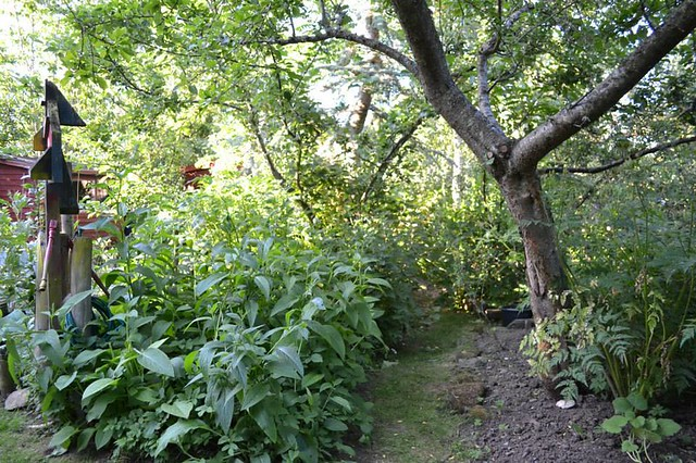 Graham Bell's forest garden