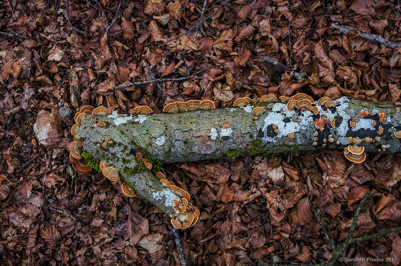 En el Bosque Encantado de Urbasa