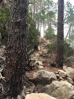 La partie du chemin démaquisé descendant de Bocca di Ricu sur l'autre rive de Funtane Rosse
