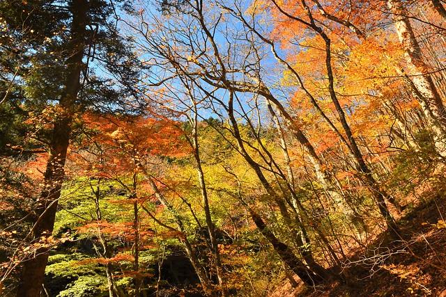 奥多摩の紅葉風景