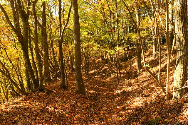 秋の御正体山 紅葉登山