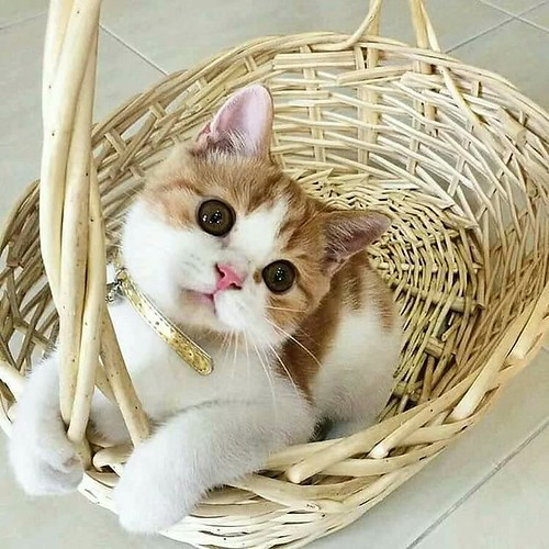 cute #catmom #catmomcorner #kitty...