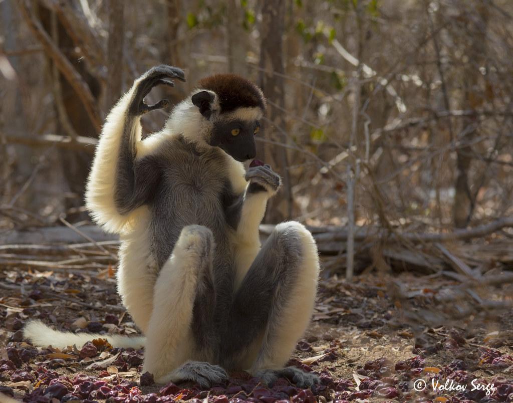 Мадагаскар: В стране невиданных зверей