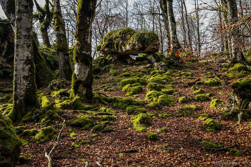 Roca en el Bosque Encantado de Urbasa
