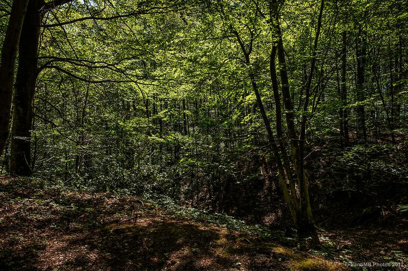 Cerca del pantano de Santa Fe de Montseny