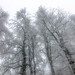 My_1st_impressions_Forest _Bjelašnica_Bosnia-16