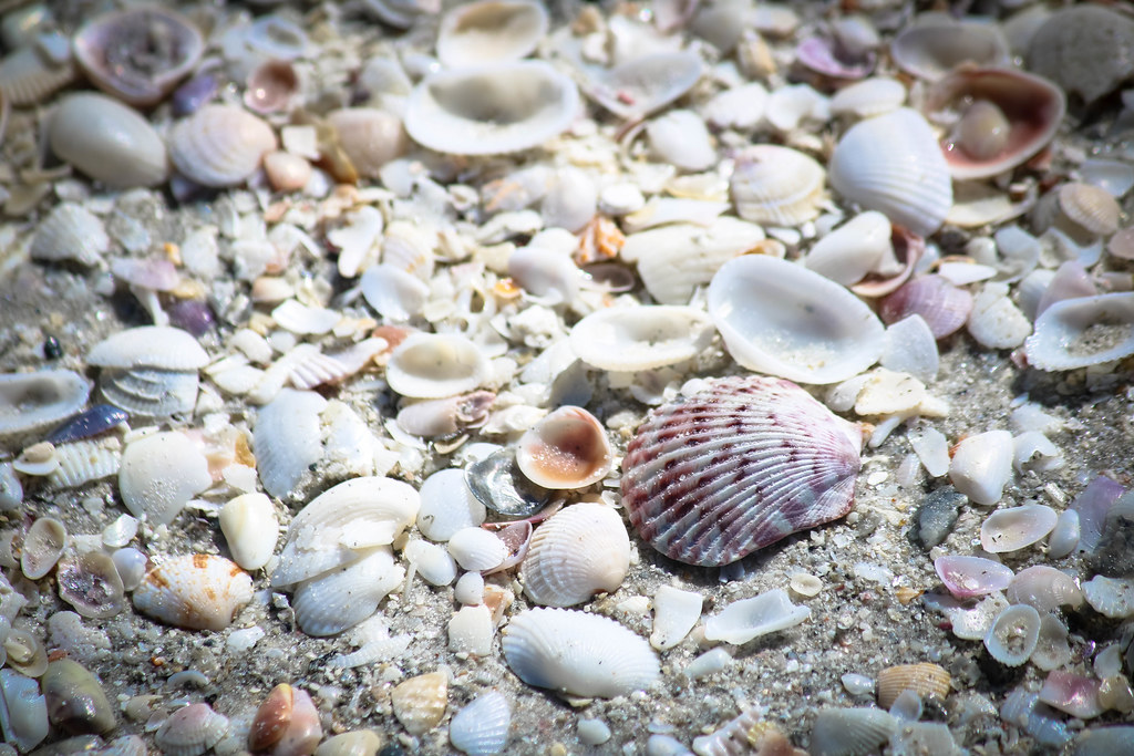 Macro Monday Shells Shellseas On The Shoresea