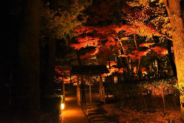 大田黒公園の紅葉ライトアップ入口