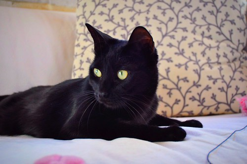 Selva, gatita Pantera guapa, estilizada y divertida esterilizada, nacida en Mayo´16, en adopción. Valencia. ADOPTADA. 38522057226_e1ea9714ca
