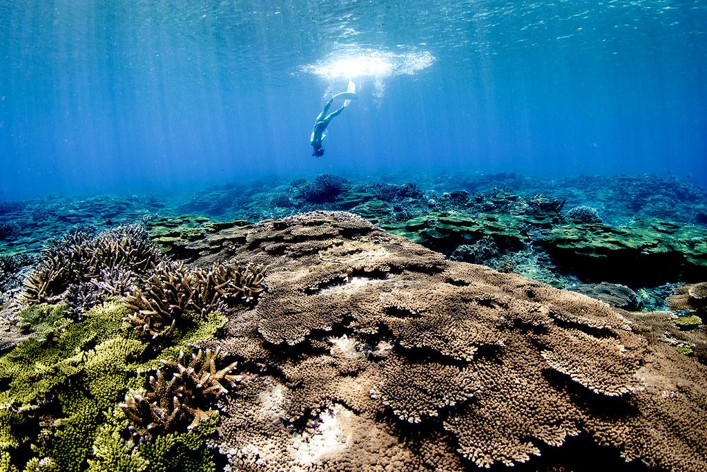 澎湖南方四島珊瑚覆蓋率高、生物多樣性佳,吸引遊客到此朝聖。(照片提供/DivingShot.Co)