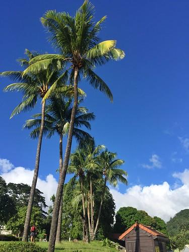 Palmeras en una de las islas del Caribe como Granada