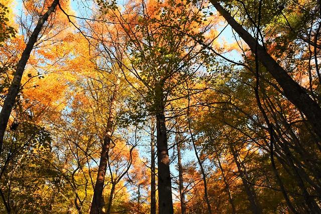 今倉山の紅葉