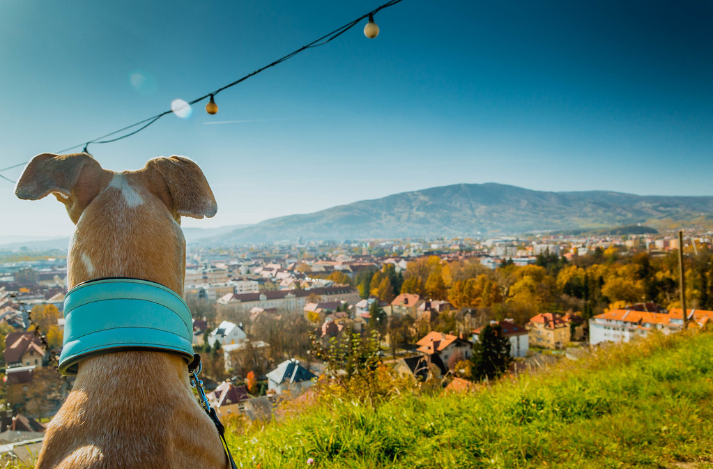 Dog Watching The View Stock Photos Fotos Download Flickr