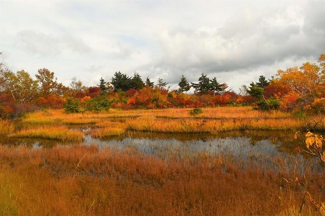 鳥原山 湿原の草紅葉