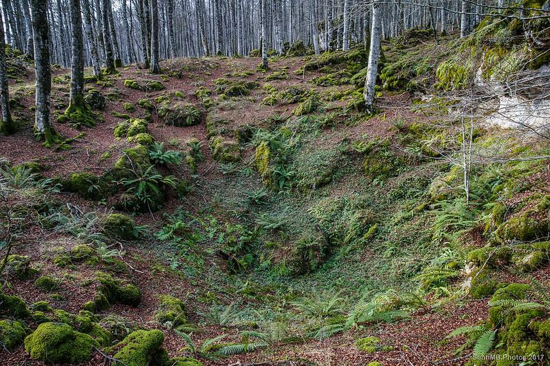 Hondonada en el Bosque Encantado de Urbasa