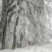 My_1st_impressions_Forest _Bjelašnica_Bosnia-12