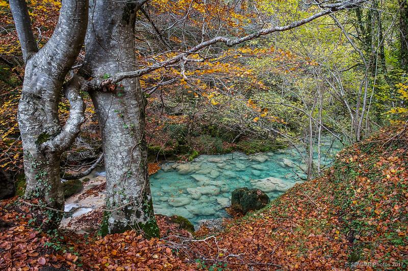 Dos hayas unidas por una rama frente al río Urederra