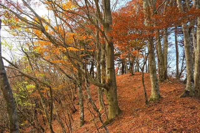 御正体山~石割山 紅葉の登山道