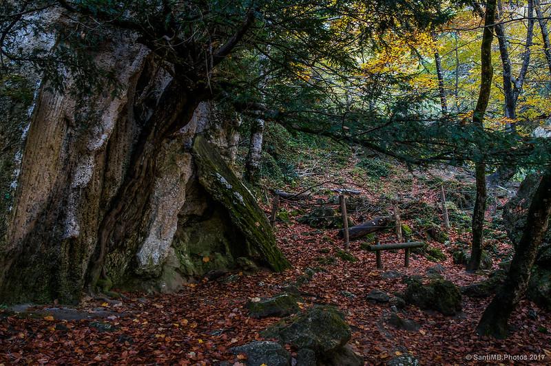 Árbol unido a una roca cerca del Nacedero del Urederra