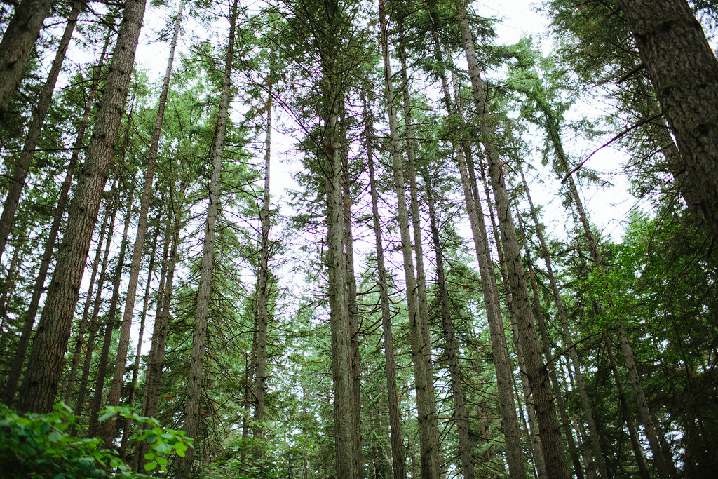 Get Free Credit Report >> Washington Woods Tall Trees | If you use this image please c… | Flickr