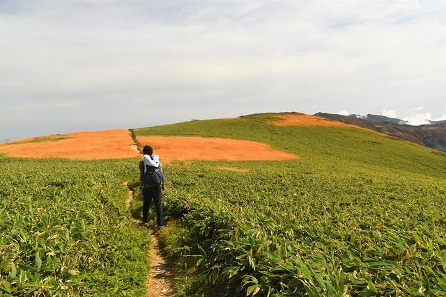 朝日連峰 稜線の草紅葉と草原