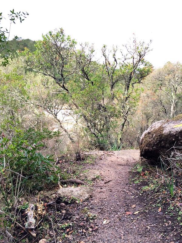 Le sentier de Ponti di Marionu (PR3) après les travaux d'entretien