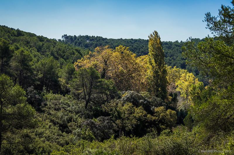 Árboles de La Moja desde Cal Jaumet Esquerrà