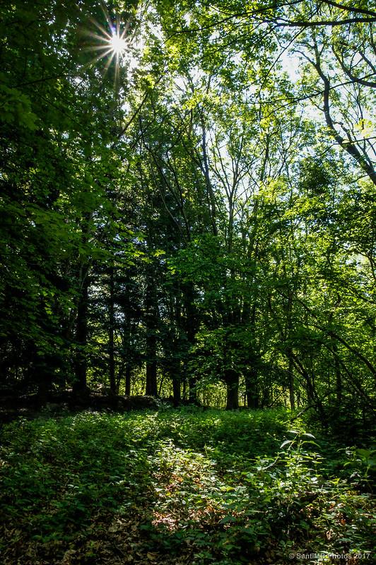 Bosque de Santa Fe de Montseny