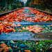 Fall on the Tracks